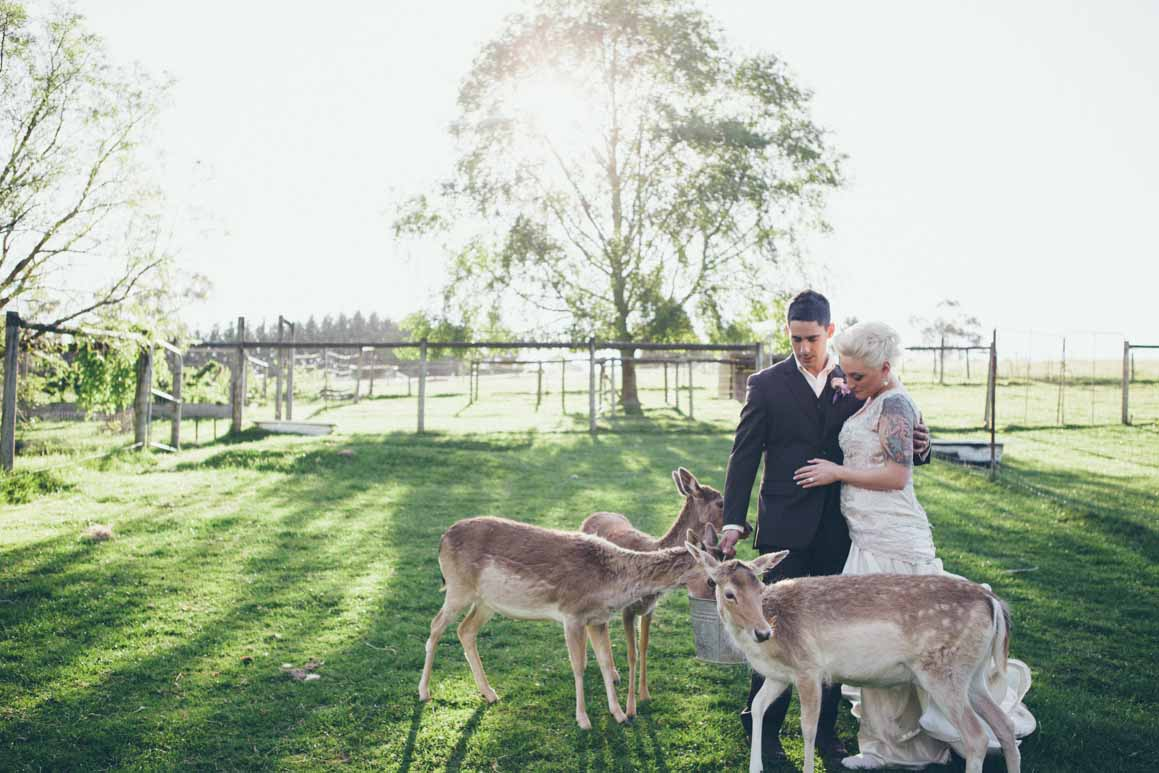 bride and groom with farm animals - vintage wedding melbourne