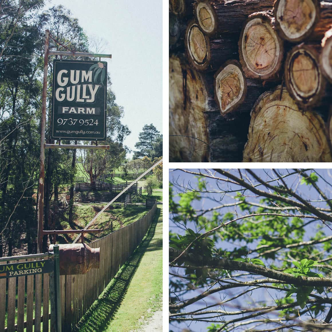gum gully - Dandenong Ranges -  A very popular wedding venue