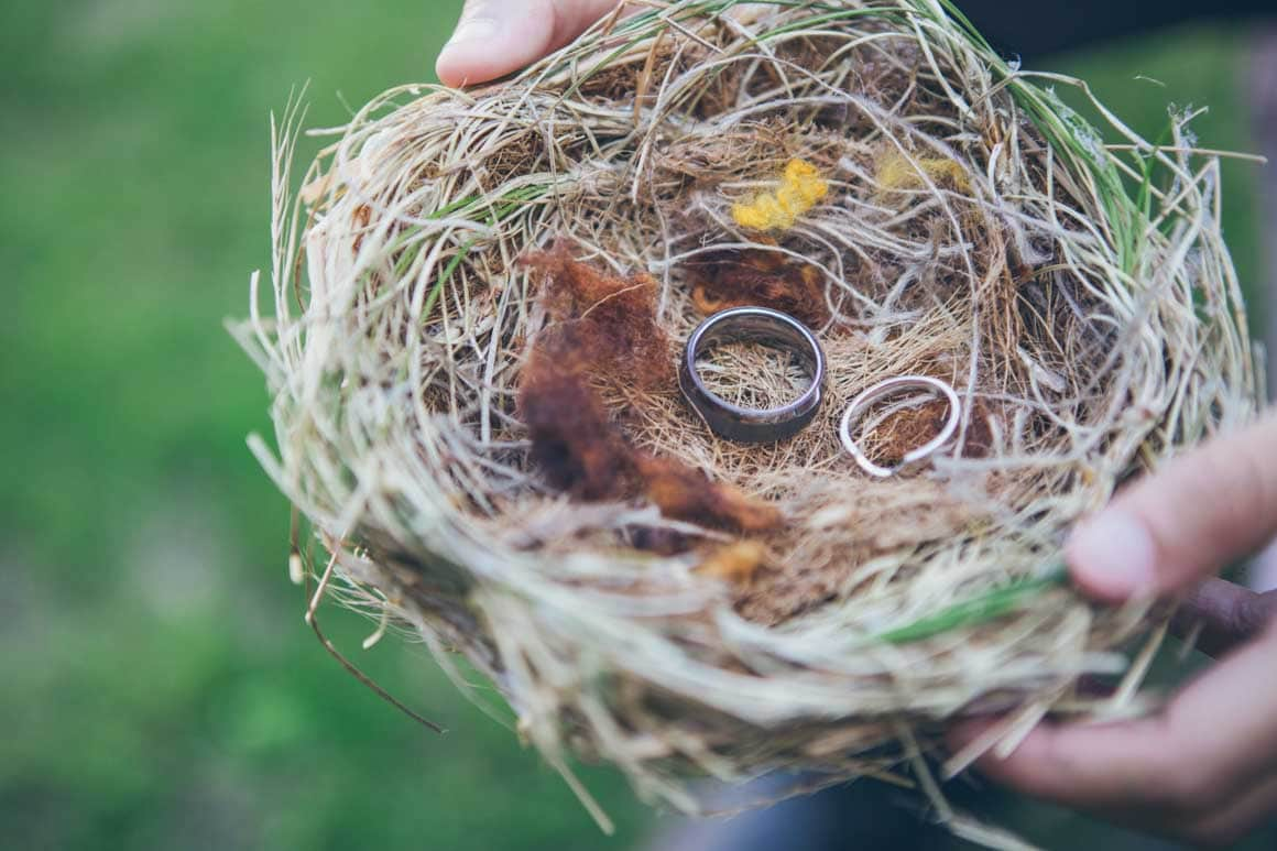 rings presented in bird nest