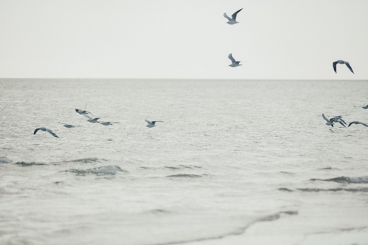 birds flying over water - beach weddings