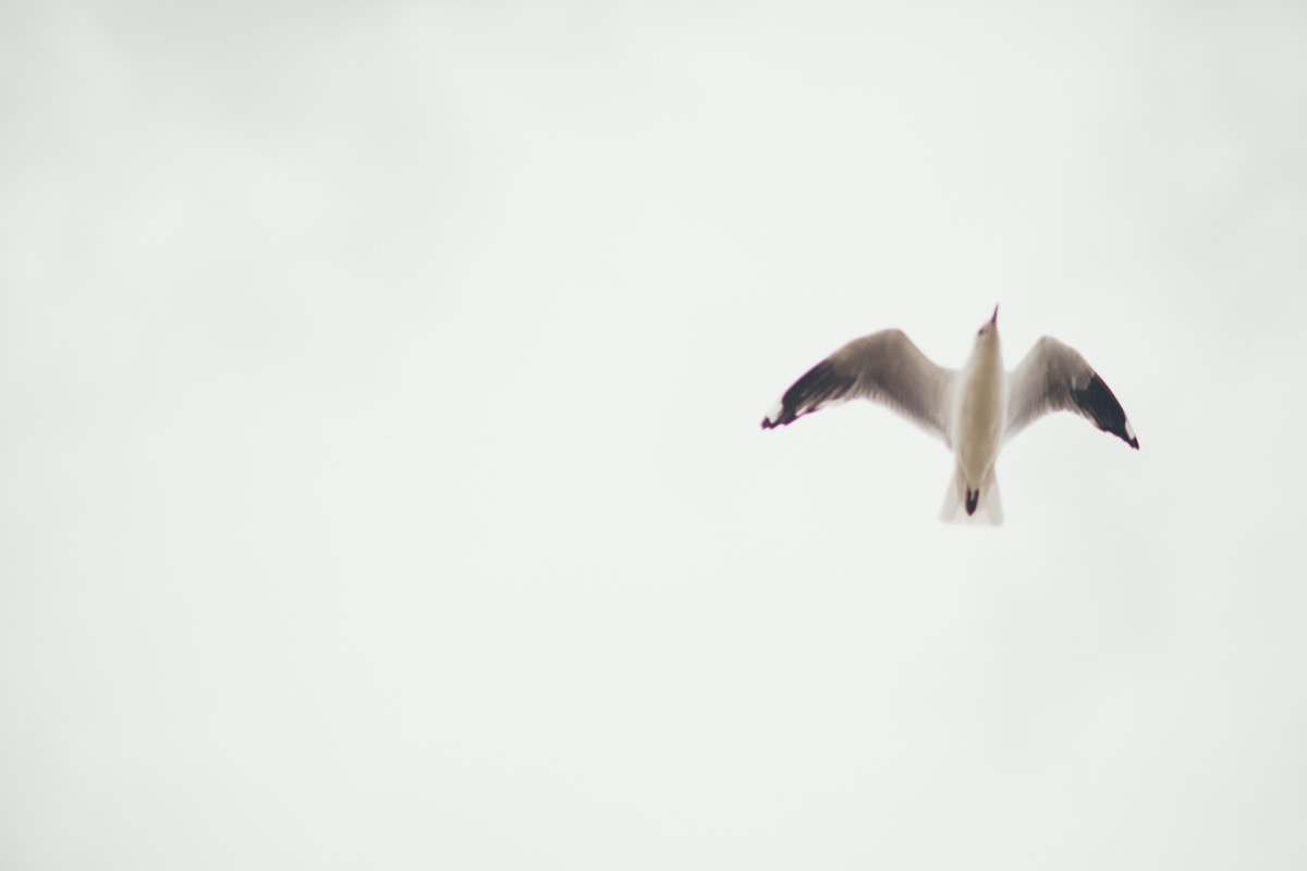 bird - blurry - seagull