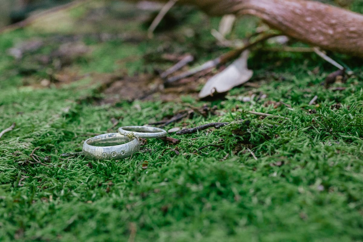 rings on moss in forest