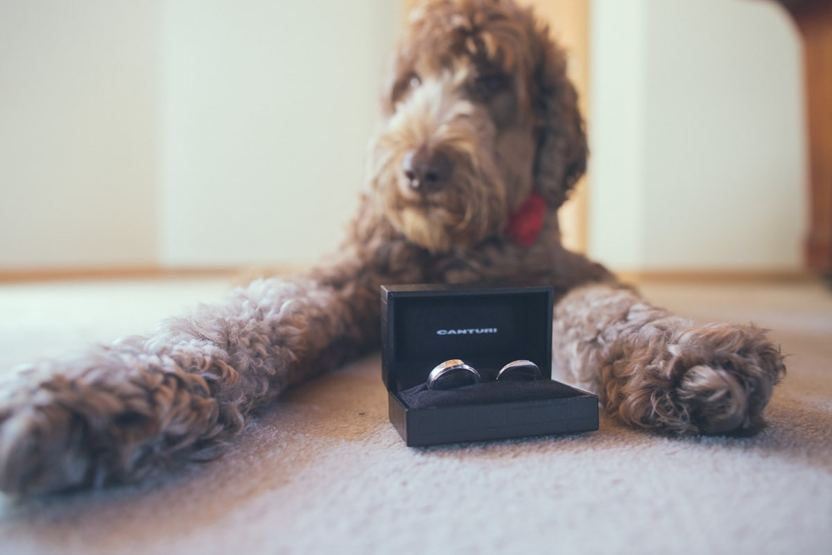 dog watching over the wedding rings