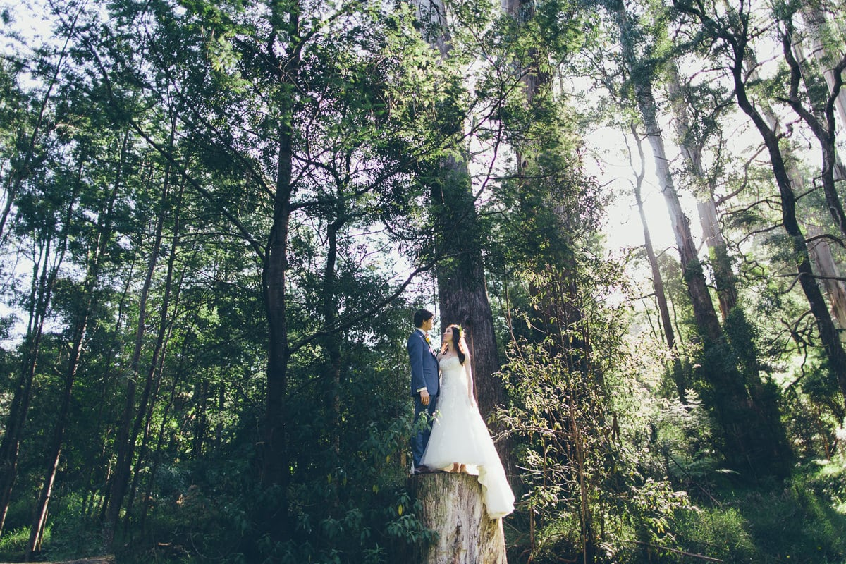 Melbourne Forest Wedding Venue - what a wedding - stunning melbourne wedding photography in the forest around melbourne - best artistic melbourne wedding photography in 2016