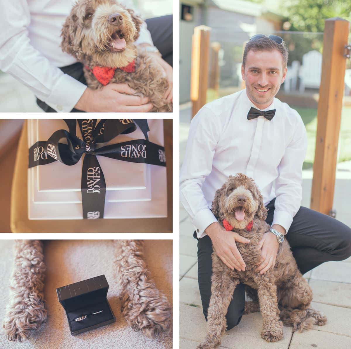 groom with animals - dog and wedding - photographer