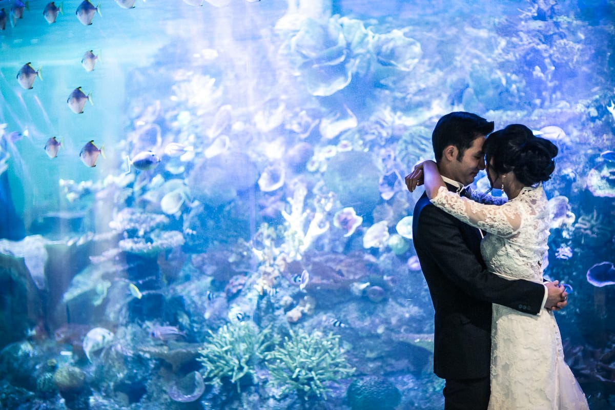 Melbourne Aquarium Wedding Photographer