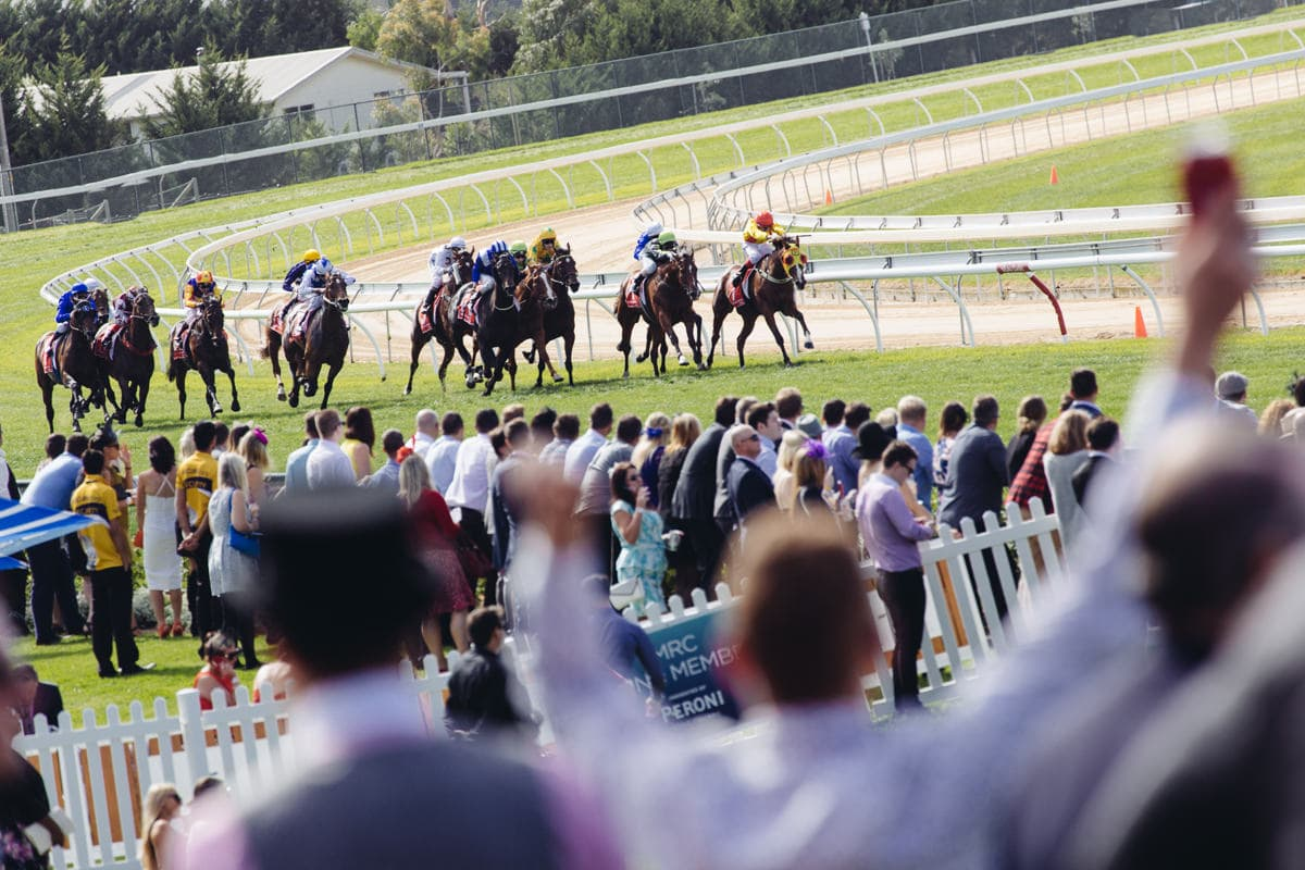 mornington cup 206 - action and horses