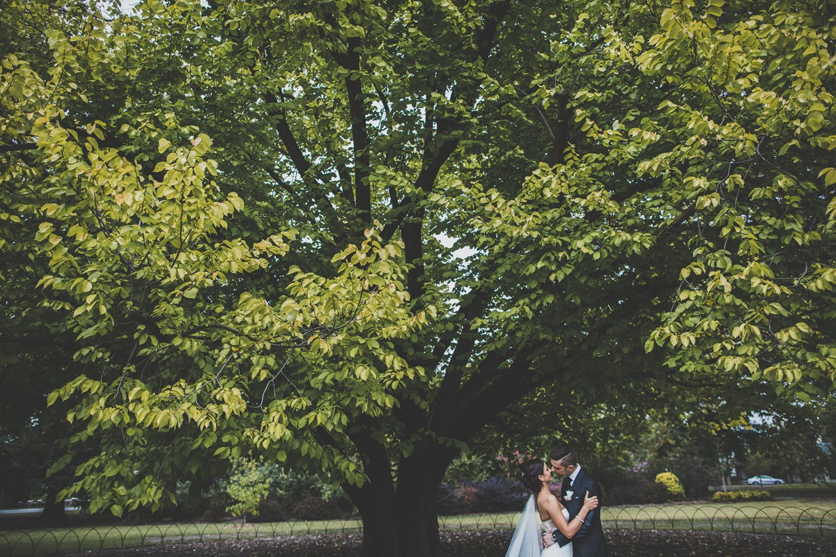 wedding photos with trees