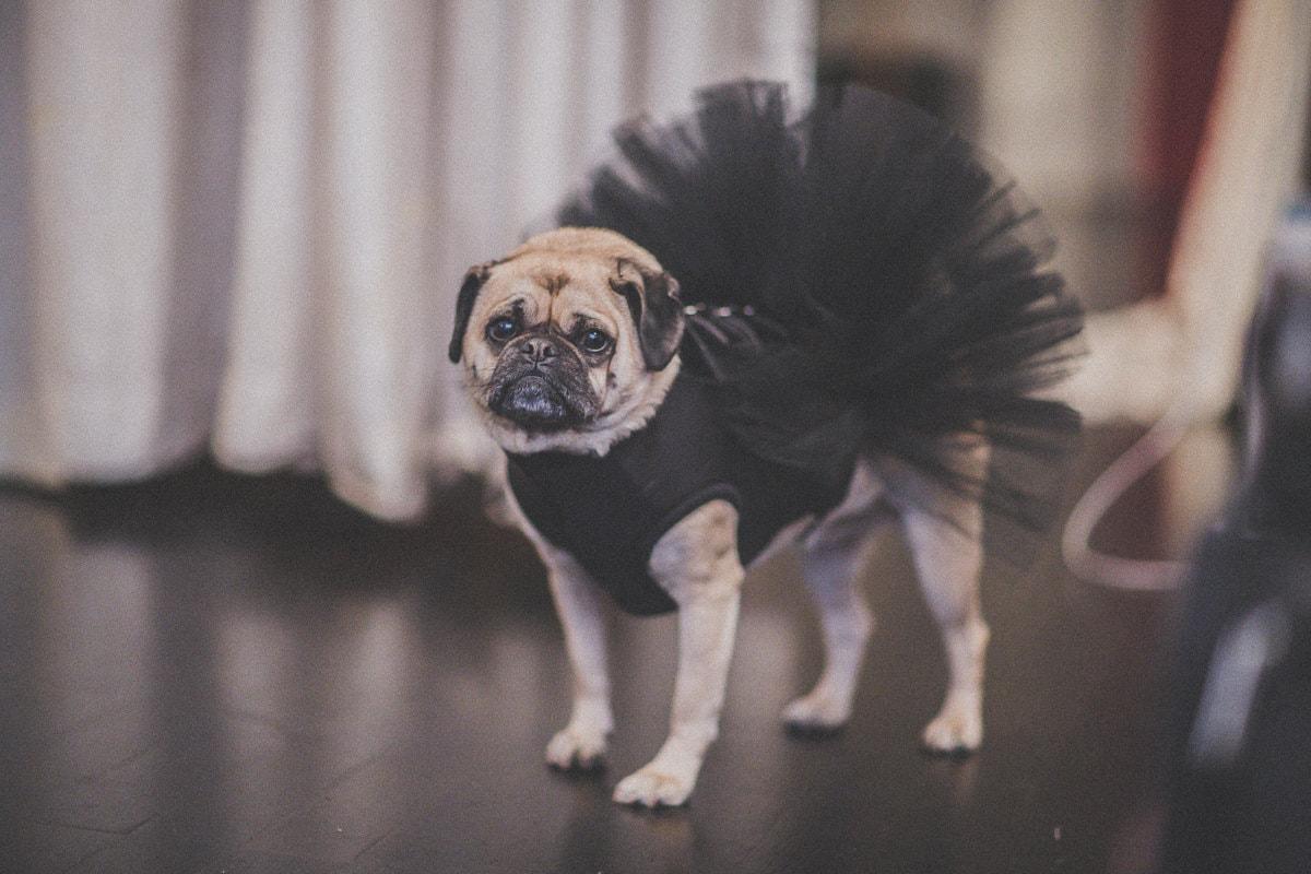 wedding with animals - dog in tutu