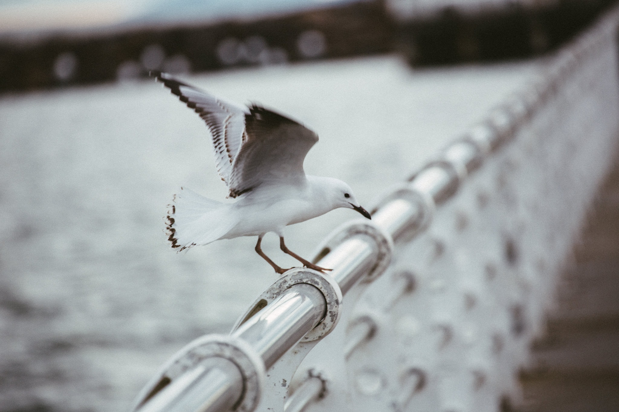 seagull on st kilda pier melbourne - details for wedding photography - creative