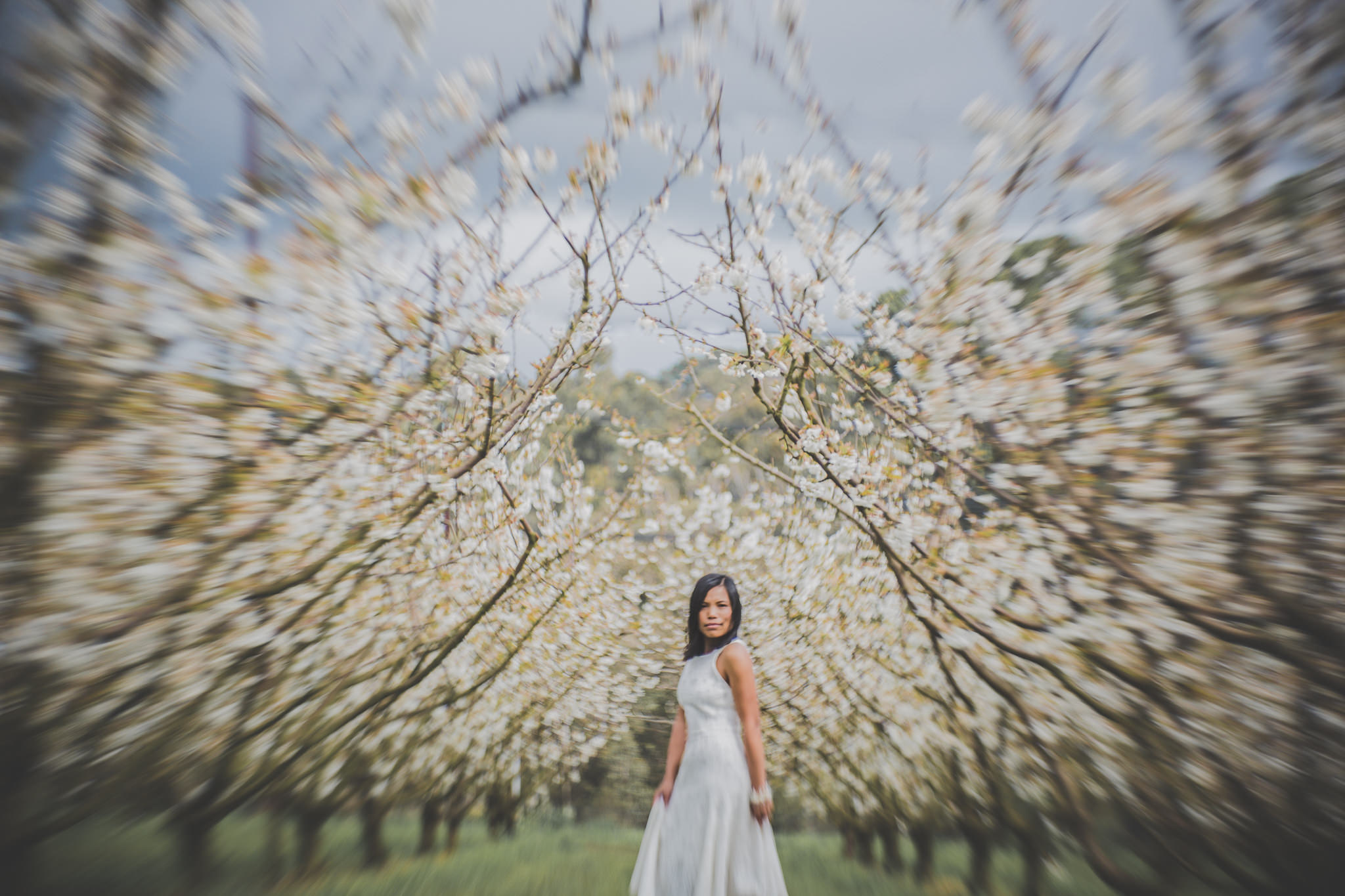 cherry blossom photos Melbourne - best creative fine art wedding photographer in melbourne
