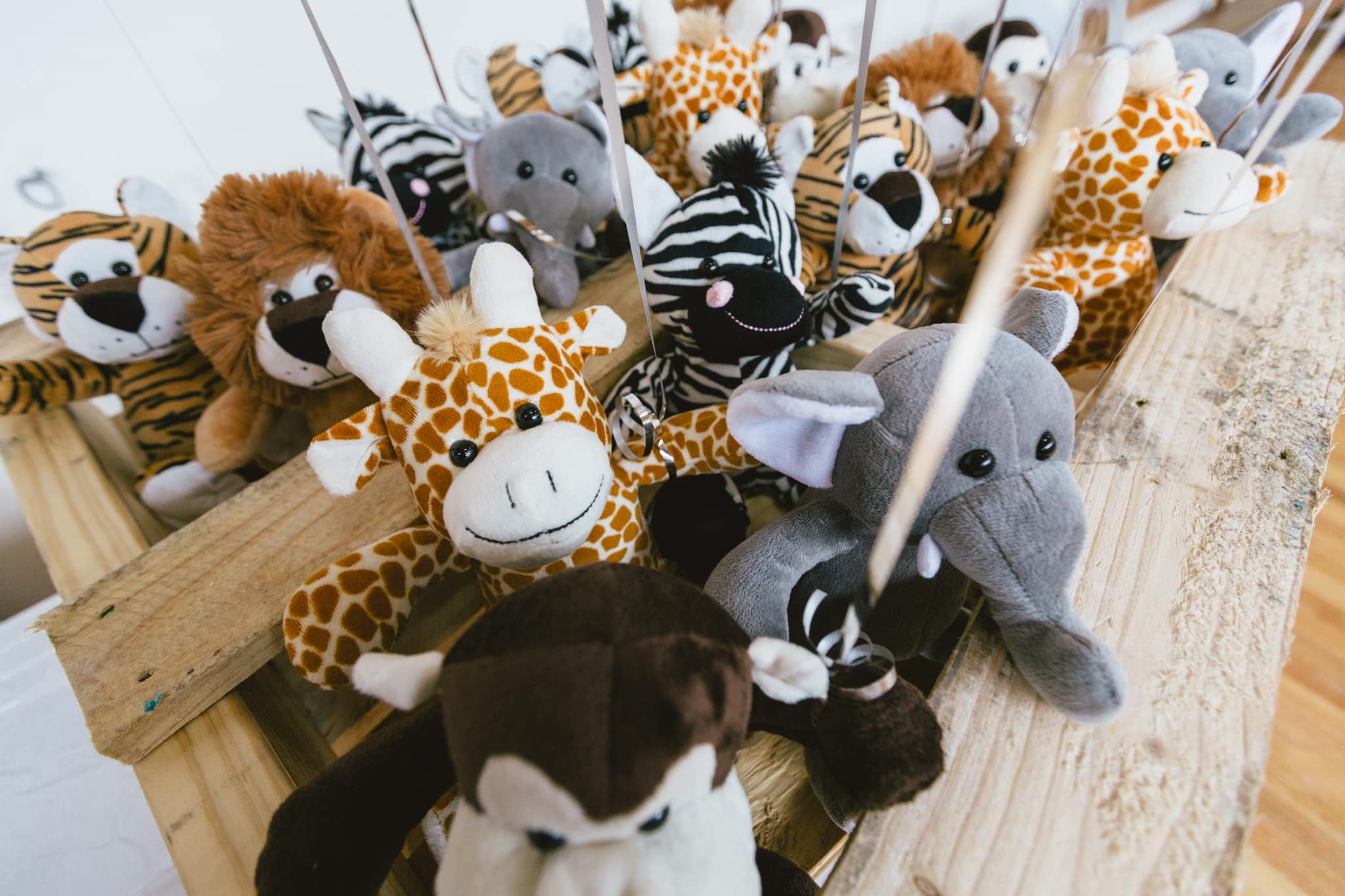animals at kids birthday party event - photographer captures styling and decoration - personal and commercial lifestyle photos