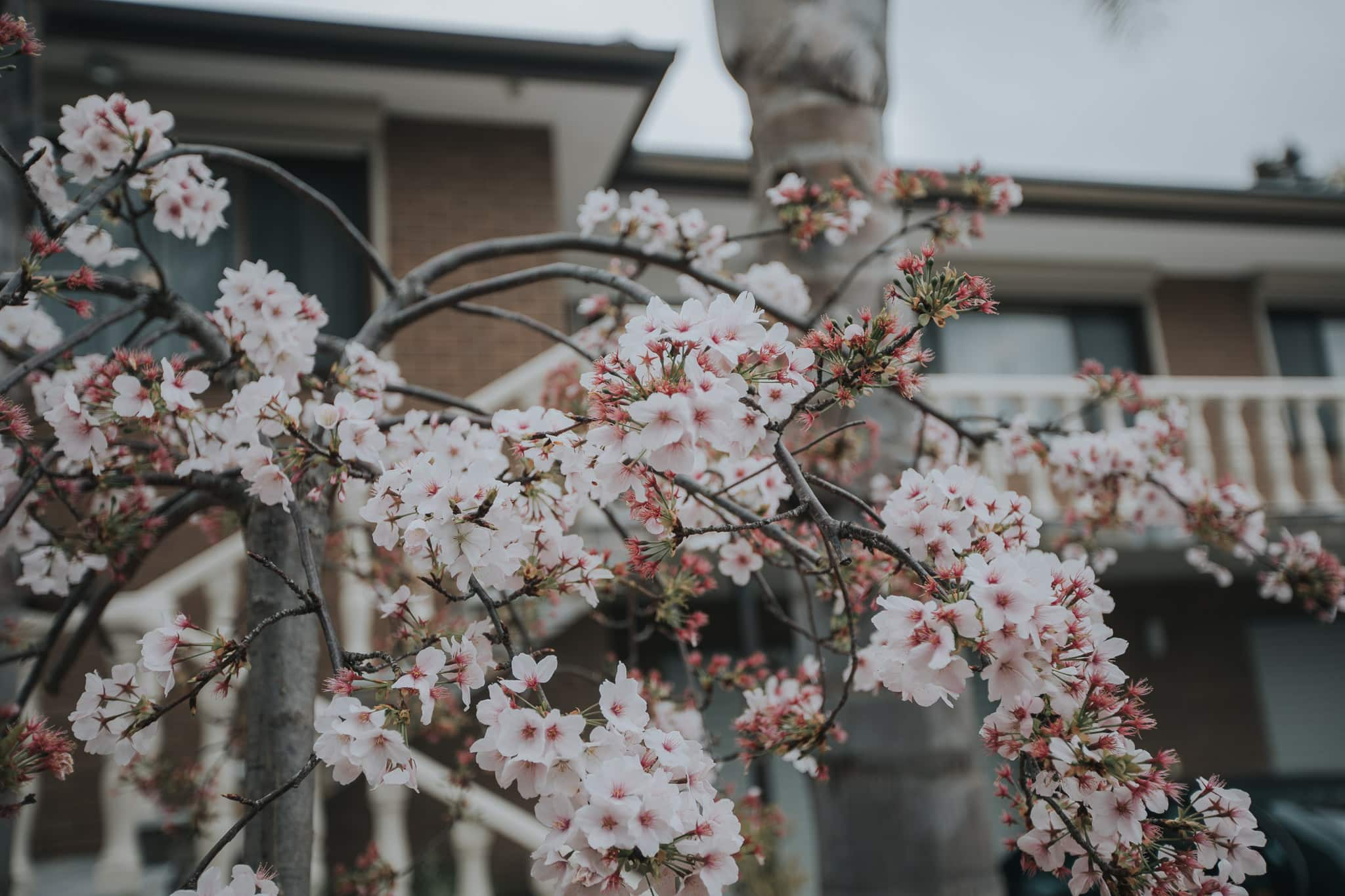 Blossom Tree at wedding